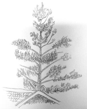 Träd tecknat i blyerts