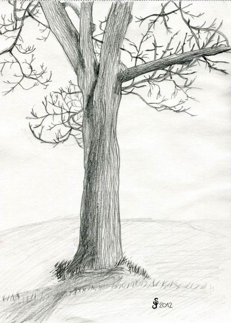 Stora trädet