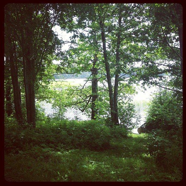Lummig svensk sommar